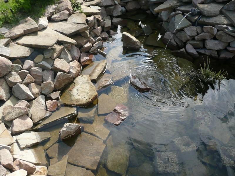Oczko wodne wykonane przez firmę Aloes