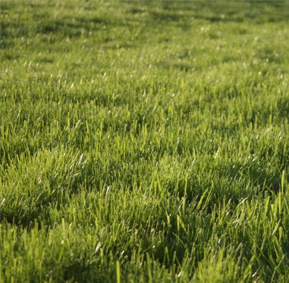 Uzyskanie pięknego trawnika jeszcze nigdy nie było tak proste!