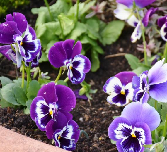 Dopasuj rośliny ogrodowe i ciesz się pięknym ogrodem
