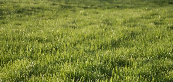 Kto decyduje się na zakładanie i odnawianie trawników - Kraków