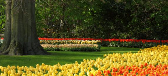 Stworzymy ogród Twoich marzeń!