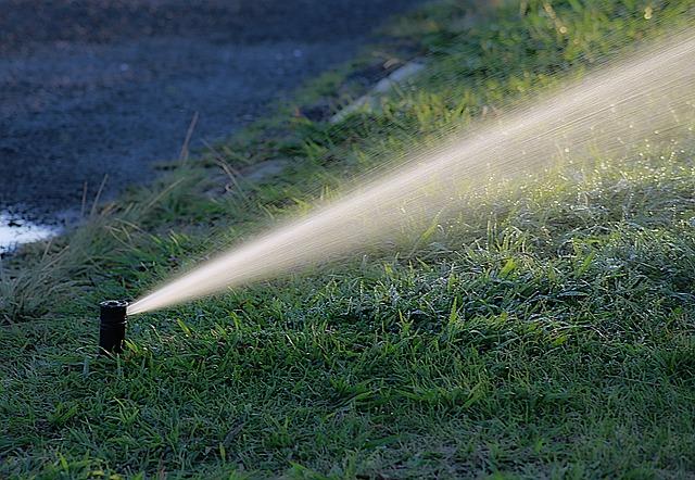 Życiodajna woda dla roślin w Twoim ogrodzie
